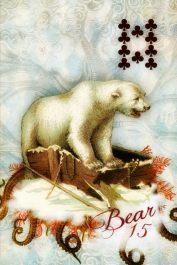 SSL 15 Bear